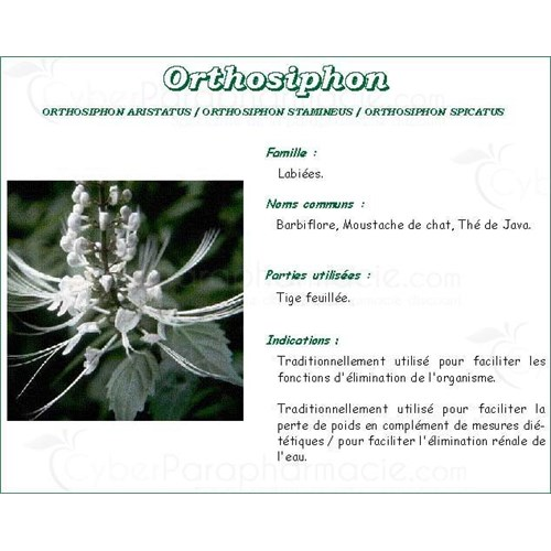 ORTHOSIPHON FEUILLE PHARMA PLANTES, Feuille d'orthosiphon, vrac. - coupée sac 250 g